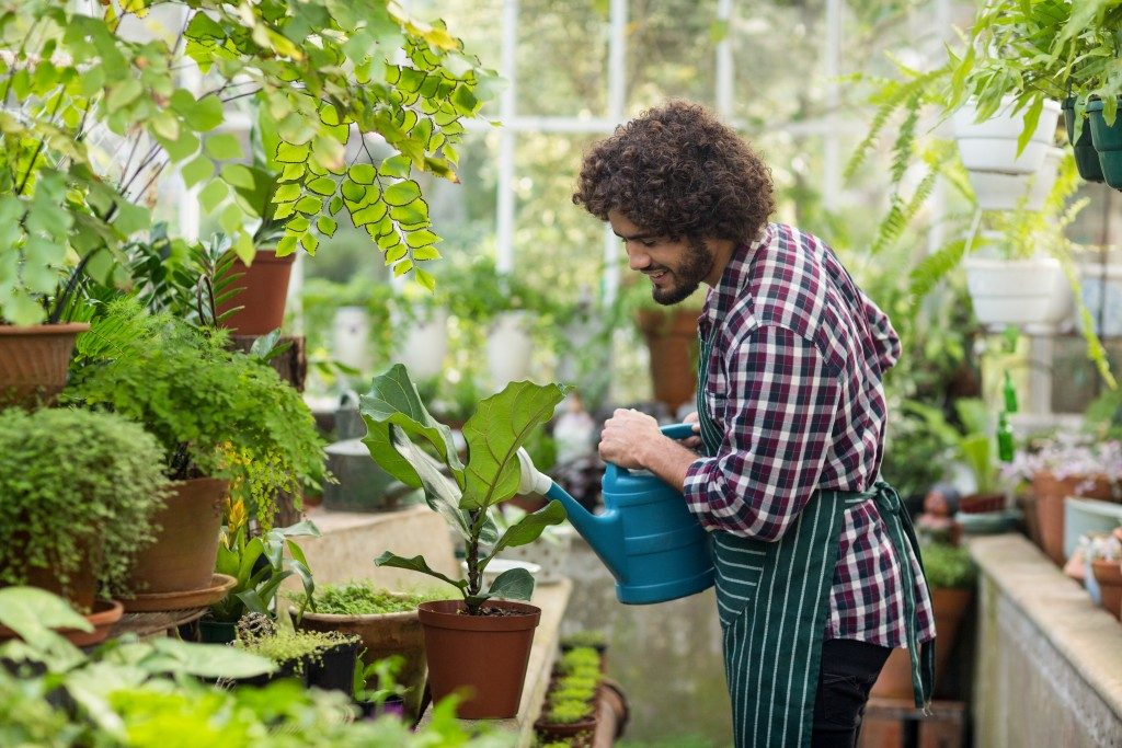 Man watering a plant in a garden